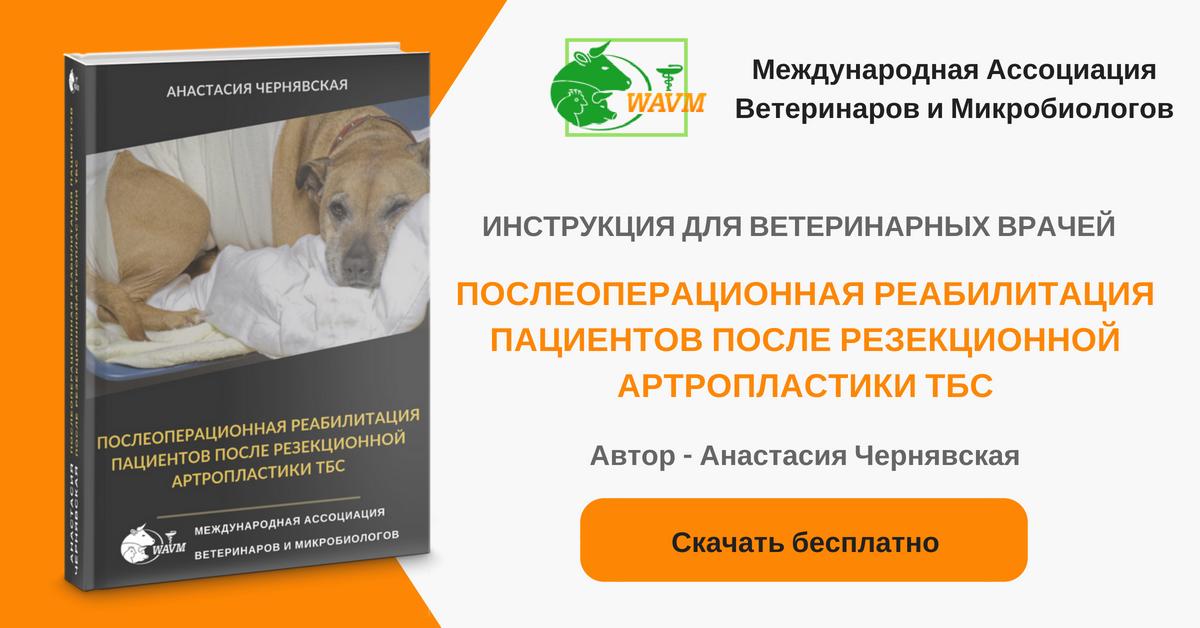 Ветеринар - вариант 2 фб адс